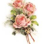 ashama-rose